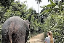 Roll Trips, Nuwara Eliya, Sri Lanka