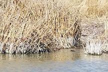Bear River Migratory Bird Refuge, Brigham City, United States