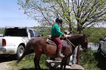 Overland Morgan Horse Farm, Dansville, United States