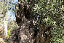 The Governor's Olive Mill, Agios Matheos, Greece