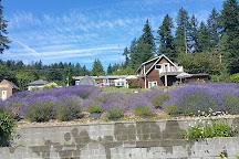 Purple Scent Lavender Farm, Bremerton, United States