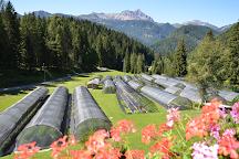 Azienda Agricola Domini Albert, Sauris, Italy