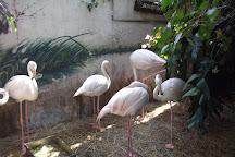Pata Zoo, Bangkok, Thailand