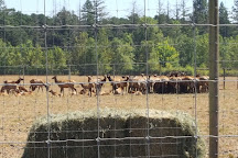 Rosse Posse Acres Elk Ranch, Molalla, United States