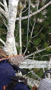 Aussie Tree Care - Tree removals and tree lopping Gold Coast, Logan and Brisbane