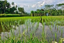 Sunsky Bali Tour, Ubud, Indonesia