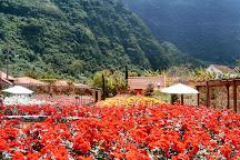 Roseiral Da Quinta Arco, Madeira, Portugal