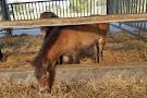 Paardenmelkerij Het Brabanderhof (Horse Dairy Farm Het Barbanderhof)