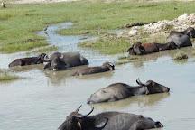 Yala Safaris - Private Tours, Tissamaharama, Sri Lanka