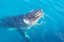 Brisbane Whale Watching, Redcliffe, Australia