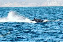 Sea Spirit Ocean Safari, Santa Cruz, United States