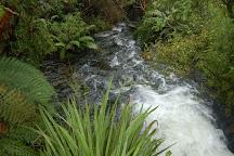 Tongariro National Trout Centre, Turangi, New Zealand