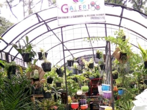 Galeri88 (tanaman hias) - Toko Bunga
