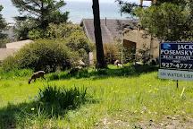 Fiscalini Ranch Preserve, Cambria, United States