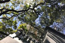 Casa Jacaranda, Mexico City, Mexico