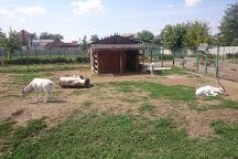 Oradea Zoo, Oradea, Romania