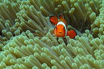Let's Dive Tulamben, Tulamben, Indonesia