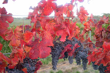 Patina Wines, Orange, Australia