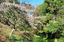 The Forgotten Forest Arboretum, St. Peter, United Kingdom