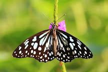 Native Biodiversity Garden, Alibaug, India