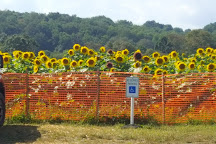 Sussex County Sunflower Maze, Sandyston, United States