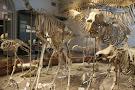Natural History Museum (Luonnontieteellinen Museo)