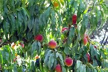Payne's Orchards, Bacchus Marsh, Australia