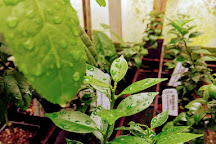 Logee's Greenhouses, Killingly, United States