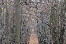 Hamstreet Woods National Nature Reserve, Ashford, United Kingdom