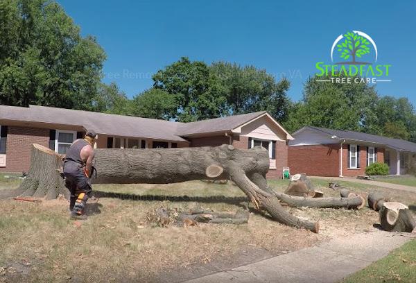 Tree maintenance and storm preparation services in Fredericksburg, VA