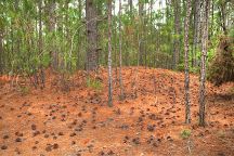 Hammock Hills Nature Trails, Ocracoke, United States