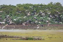 Pearaing Biodiversity Conservation Center, Siem Reap, Cambodia