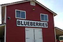 Temecula Berry Company, Temecula, United States