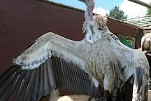 Falcon Ridge Bird of Prey Centre, Winterton, South Africa