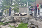 Caherconnell Stone Fort & Sheepdog Demonstrations