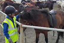 Galsi Horse Rental, Blonduos, Iceland