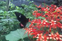 Nicaragua Butterfly Reserve, Granada, Nicaragua