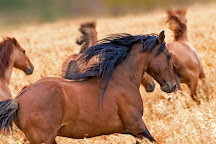 Return to Freedom, American Wild Horse Sanctuary, Lompoc, United States