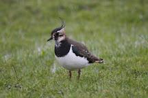 Elmley National Nature Reserve, Sheerness, United Kingdom