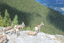 Sulphur Mountain, Banff National Park, Canada
