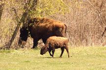 Lester's Bison Farm, Salem, United States