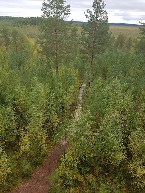 Meenikunno trail