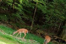 Joe Wheeler State Park, Rogersville, United States