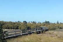 Mangrove Boardwalk, Bunbury, Australia