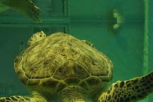 Kumejima Sea Turtle Museum, Kumejima-cho, Japan