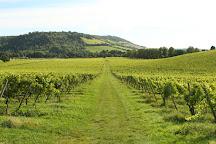 Denbies Wine Estate Ltd, Dorking, United Kingdom