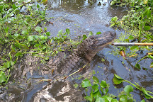 Annie Miller's Son's Swamp and Marsh Tours, Houma, United States
