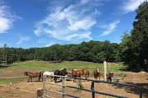 Bobby's Ranch, Westford, United States