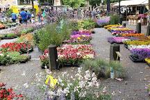 Bloemenmarkt, Janskerkhof, Utrecht, Utrecht, The Netherlands