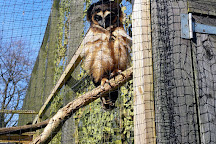 World of Owls, Randalstown, United Kingdom